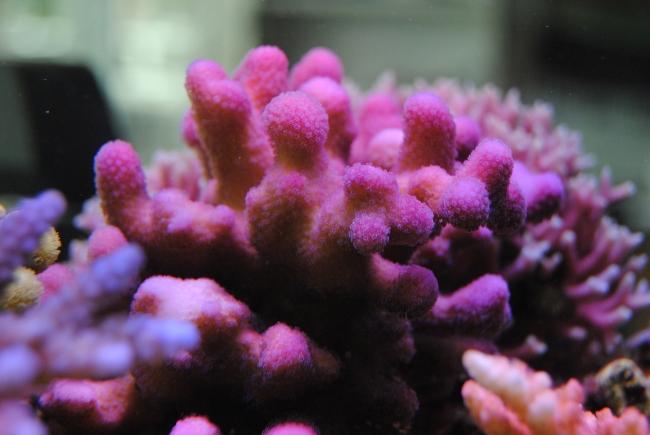 mercan akvaryum2