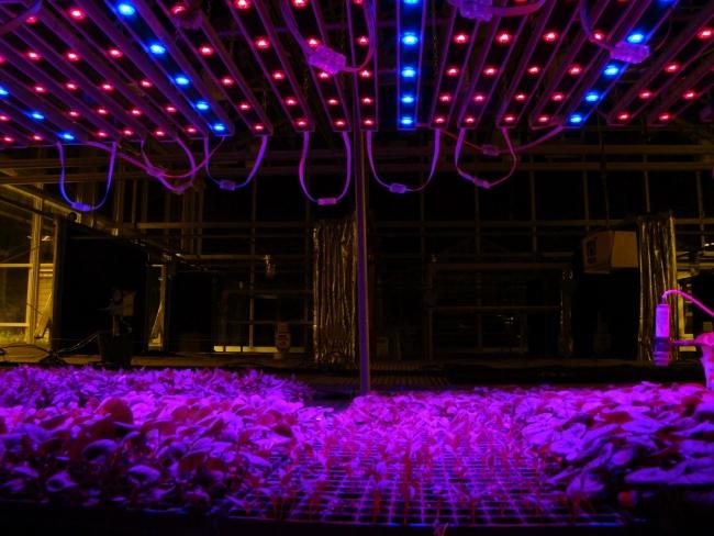 LED sera aydınlatma