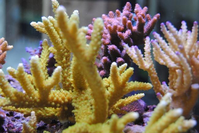 mercan akvaryum1